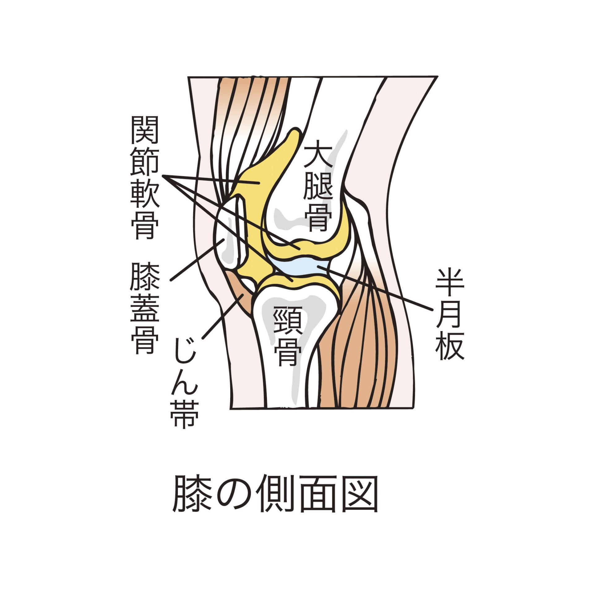 膝痛改善3ストレッチ